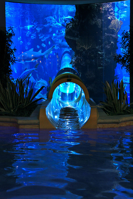Slide at a water park with a fish tank